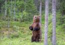 Медведь загнал на дерево потерявшихся в тайге