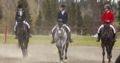 Чемпионат и первенство Кемеровской области по конному спорту