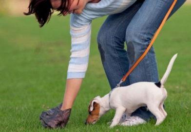 Убери за собакой – будь человеком!