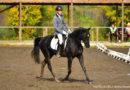 Результаты областных соревнований по конному спорту в Берёзовском