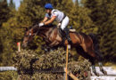 В Берёзовском прошли традиционные соревнования по конному спорту