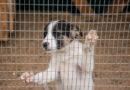 Берёзовцы собрали и передали 800 кг кормов приюту для животных